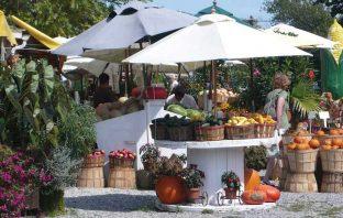 farm stand market