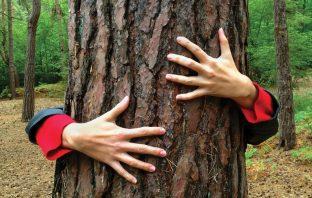 hug tree pine