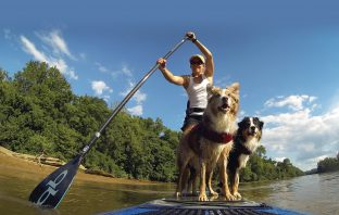 paddle board dogs