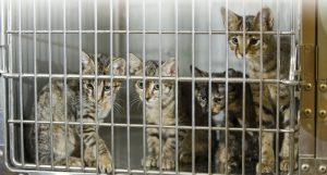 Animals-Rights-Kittens-b4d8a0a2