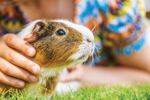 Animals-Children-Autism-5a2c463a